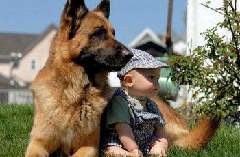 Os Pastores Alemães são bons com crianças?